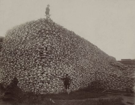 bison_skull_pile1