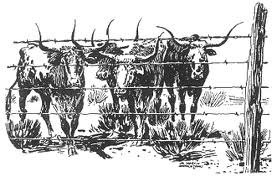 Longhorns Behind Barbed Wire Fence