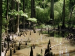 Big Thicket Cypress Swamp