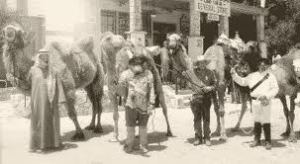 Camels at the Camp Verde Store.